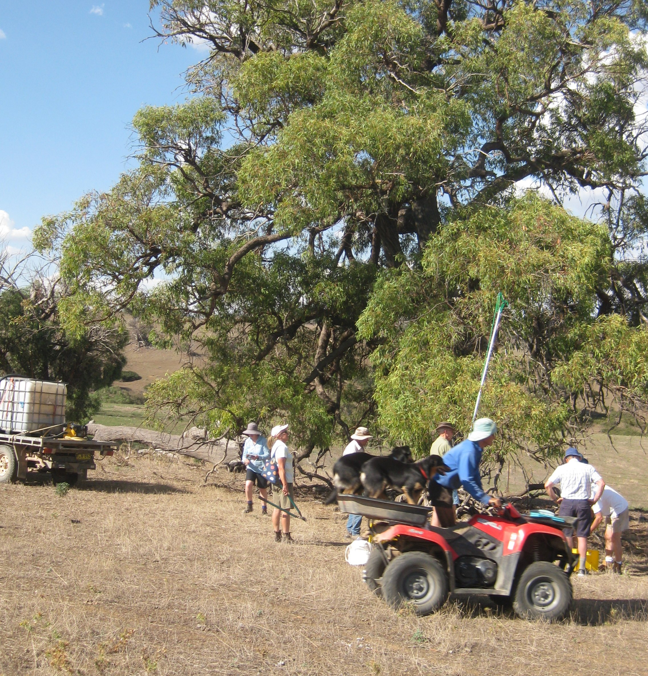 Landcare group members collecting seed from a eucalypt